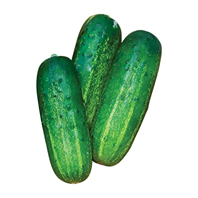 Burpee Supremo Pickling Cucumber Seeds 30 seeds : Garden & Outdoor