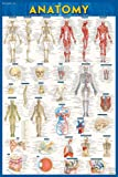 Quick Study Anatomy: Over 900 Anatomical Identifications - Covers All Major Systmes