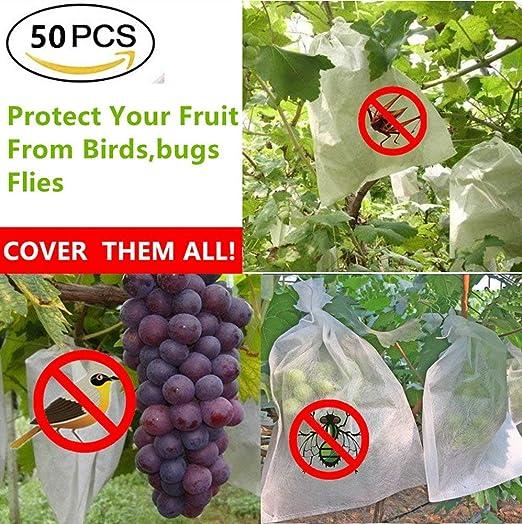 Amazon.com: BESTERY 50pcs Tela Frutas Plantas Flores ...
