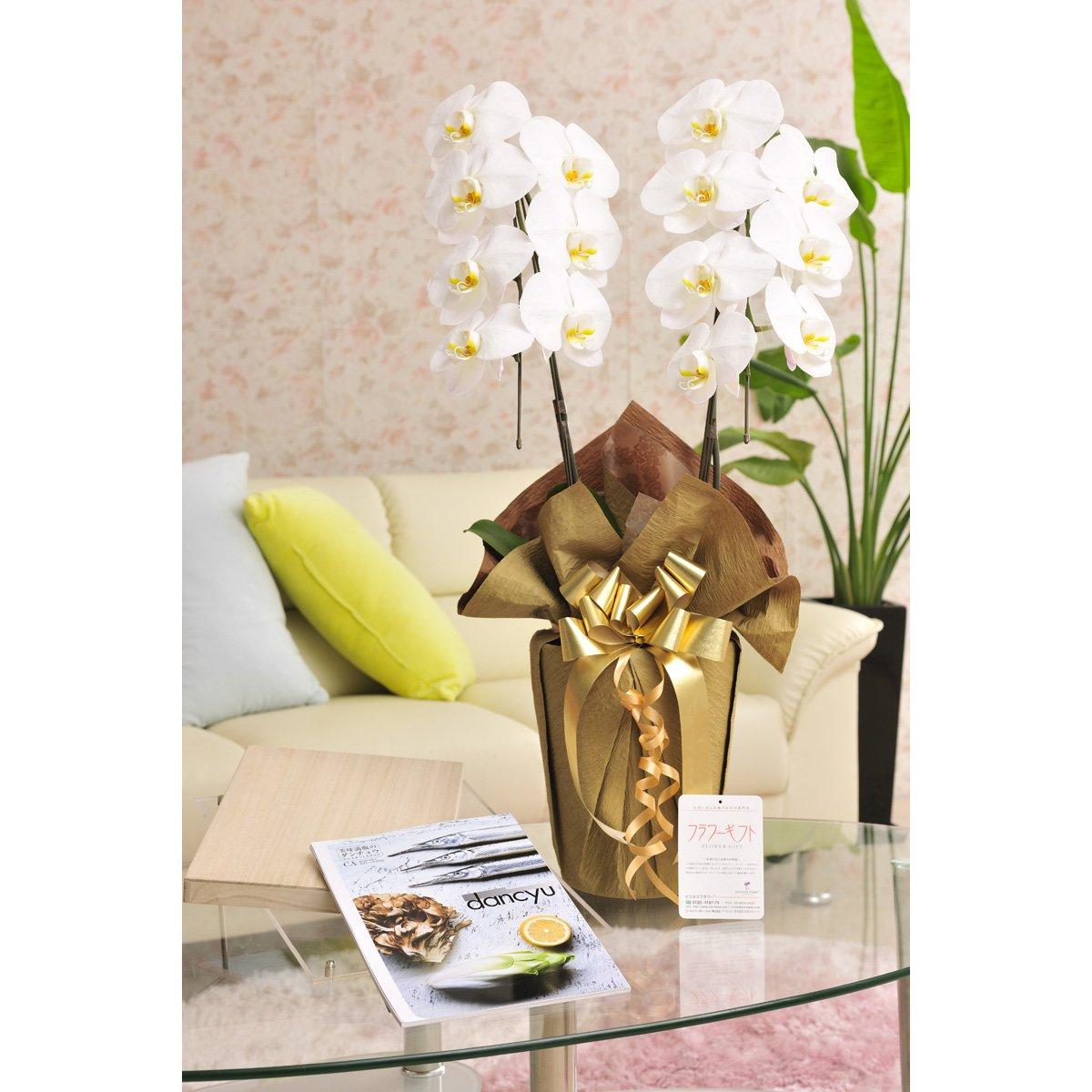 花とギフトのセット 胡蝶蘭 大輪2本立とこだわりの食材カタログギフト(ダンチュウ/CA) B07DTCZ19N