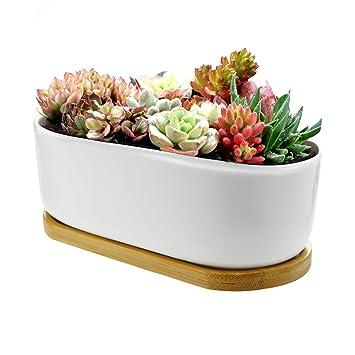 chasegarden Keramik rund weiß schlichtes Design Sukkulente Topf ...