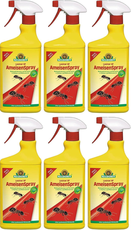19 x 19 ml Neudorff loxiran AF hormiga Spray listas para usar