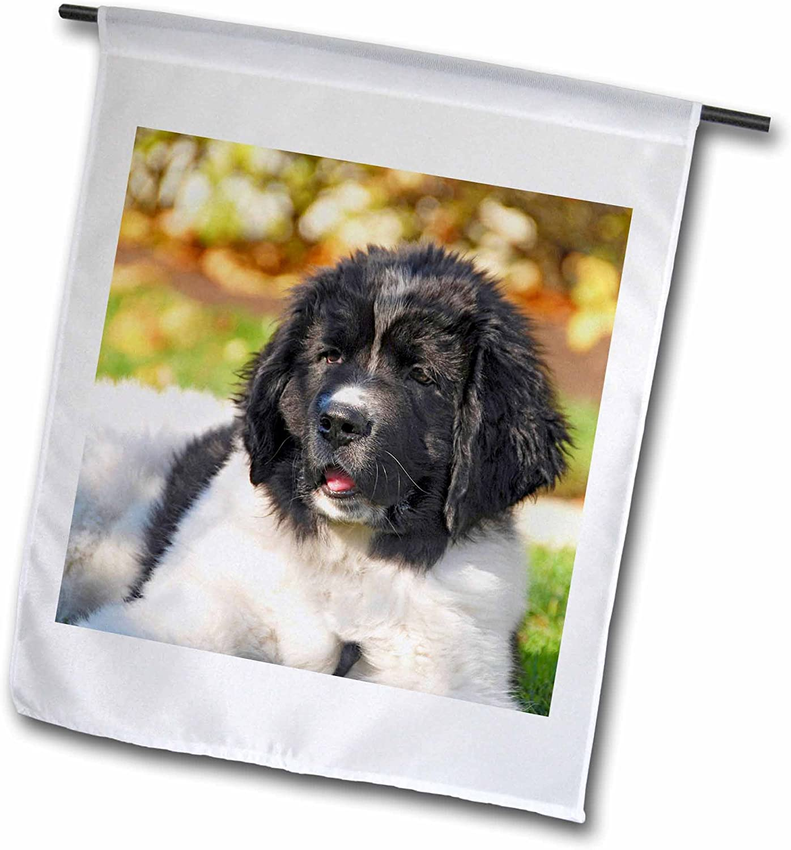 3dRose fl_93609_1 Oregon Portland Landseer Newfoundland Dog Puppy US38 Bja0528 Jaynes Gallery Garden Flag, 12 by 18-Inch