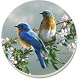 CounterArt Beautiful Songbirds Bluebirds Absorbent Coasters, Set of 4