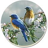 CounterArt Beautiful Songbirds Bluebirds Absorbent Coasters, Set of 4
