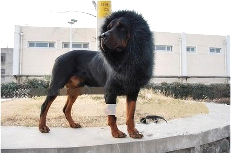 demarkt pet costume lion mane wig for dog cat halloween clothes festival fancy dress up amazoncouk pet supplies