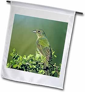Danita Delimont - Birds - Painted Bunting bird, Rio Grande Valley, Texas - NA02 RNU0720 - Rolf Nussbaumer - 18 x 27 inch Garden Flag (fl_84572_2)
