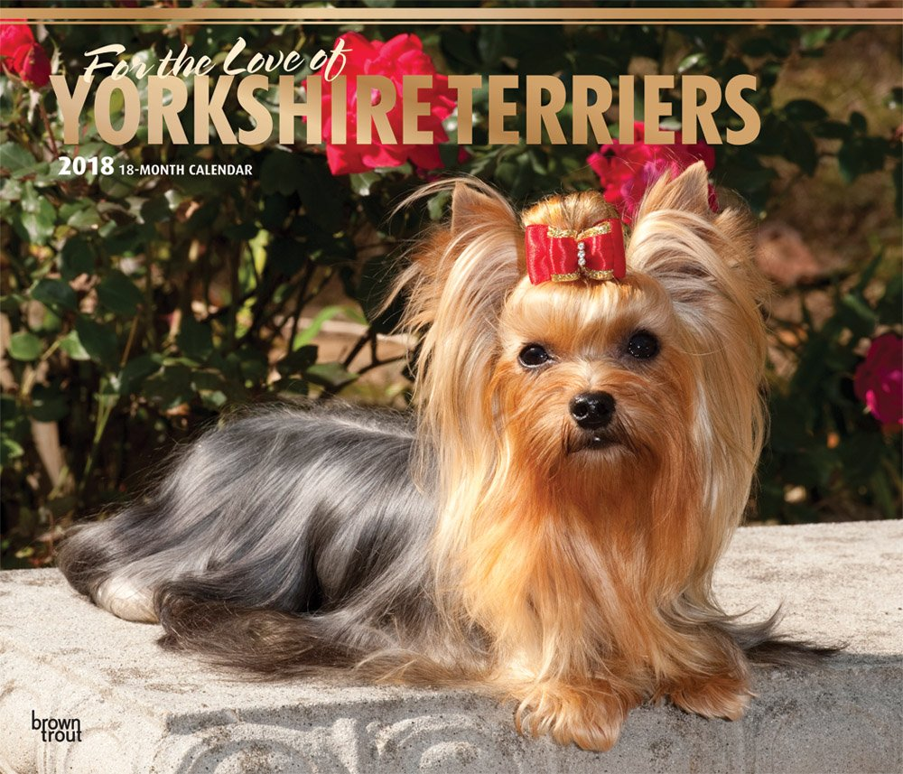 Yorkshire Terriers – For the Love of - Yorkies 2018-18-Monatskalender mit freier DogDays-App: Original BrownTrout-Kalender - Deluxe [Mehrsprachig] [Kalender] (Deluxe-Kalender)