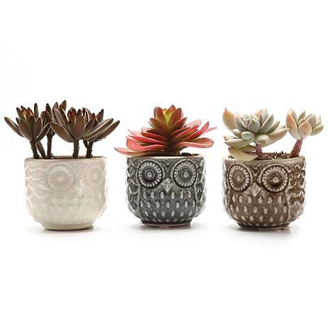 T4U 2 75 Inch Ceramic Owl Pattern Succulent Plant Pot Cactus Flower Amazon  Com. Pleasurable Inspiration ...