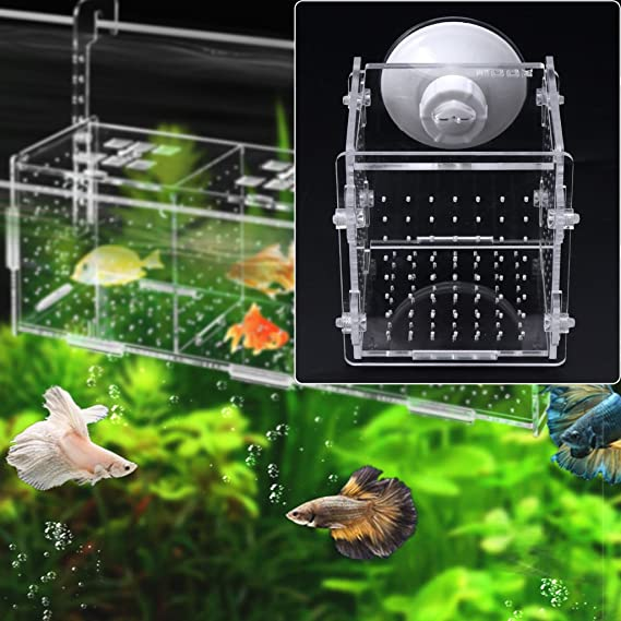 Dabixx 1 Pieza Criadero de Peces Caja de Aislamiento Pecera Acuario Incubador Criador Criador para Peces bebé: Amazon.es: Hogar