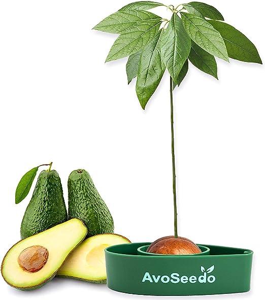 AvoSeedo Kit Jardineria para Aguacate - Gadget Decoracion Casa Y ...