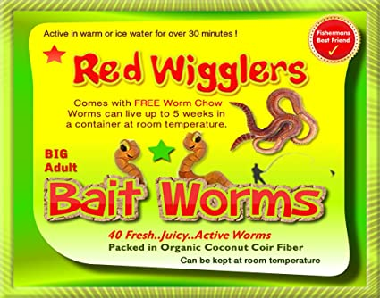 Amazon.com: Rojo Wigglers (40 adulto) Live, saludable Rojo ...