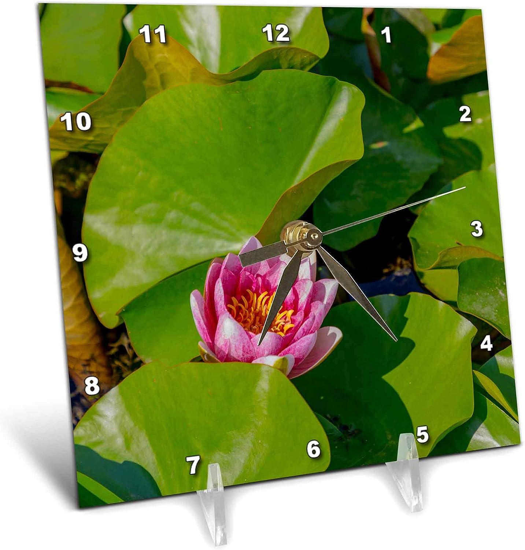 3dRose Croatia, Zagreb. Water Lily Plant in Botanical Gardens - Desk Clocks (dc_330499_1)