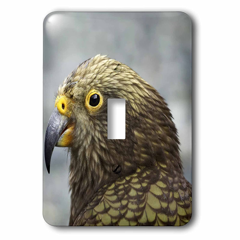 Tropical Bird New Zealand Single Toggle Switch 3dRose LSP/_75807/_1 Kea Alpine Parrot