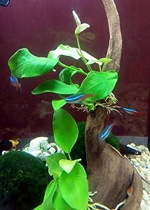 10 best plants for betta fish live fake betta plants 2019