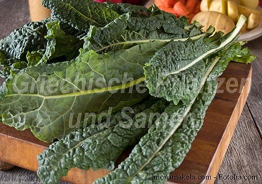 Potseed Palmkohl Kale Repollo Negro Tuskany 50 Semillas de ...