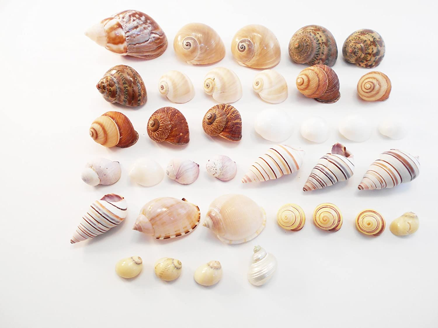 Small Shell,S
