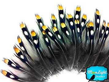 moonlight feather feathers gold