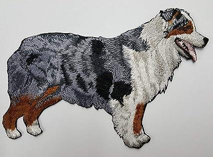 Amazoncom Blue Merle Aussie Australian Shepherd Dog