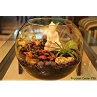 "Nature In Vogue 10"" Glass Fish Pot Transparent Terrarium Planter"