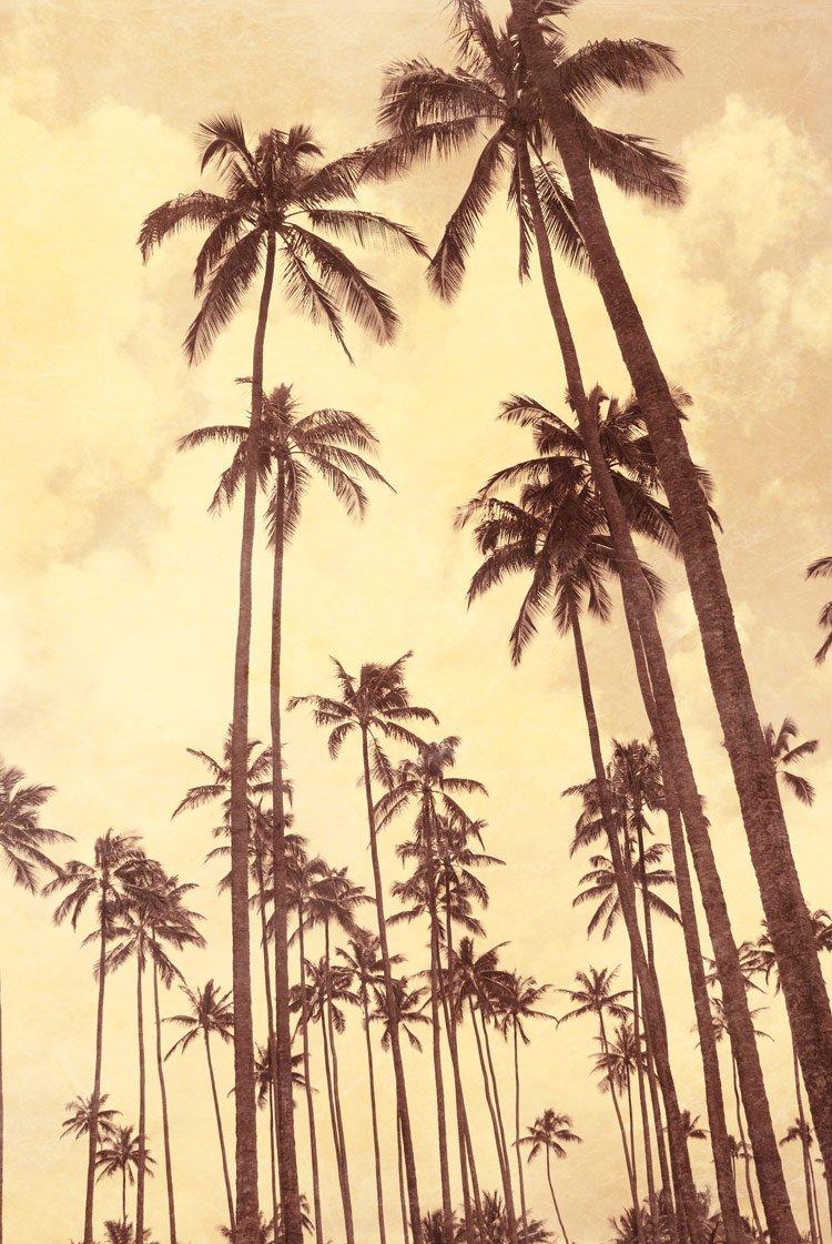 Palm Vista V , 36x24in. (paper)