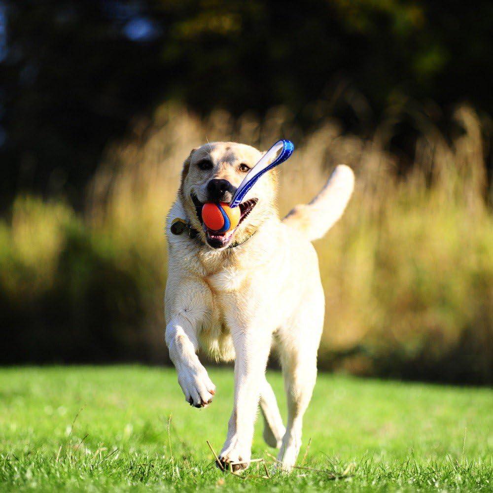 ChuckIt Ultra Tug - Pelota de lanzamiento con correa para perros ...