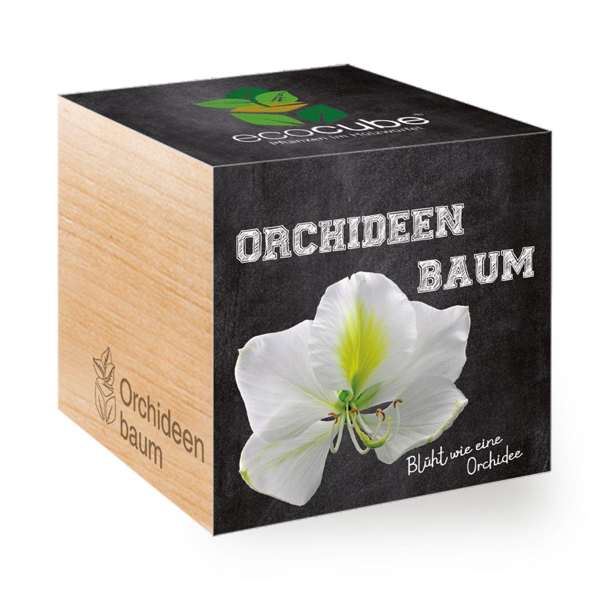Orchideenbaum im Holzwürfel Ecocube