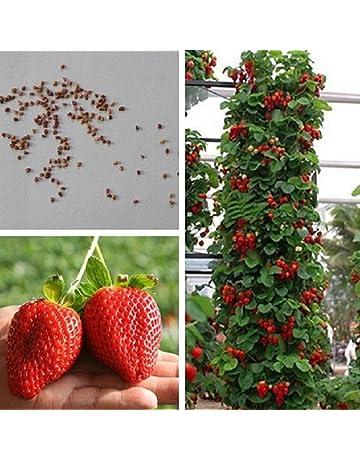 TOPmountain Semillas de Plantas frutales 100pcs Semillas de Kiwi Semillas de /árboles frutales