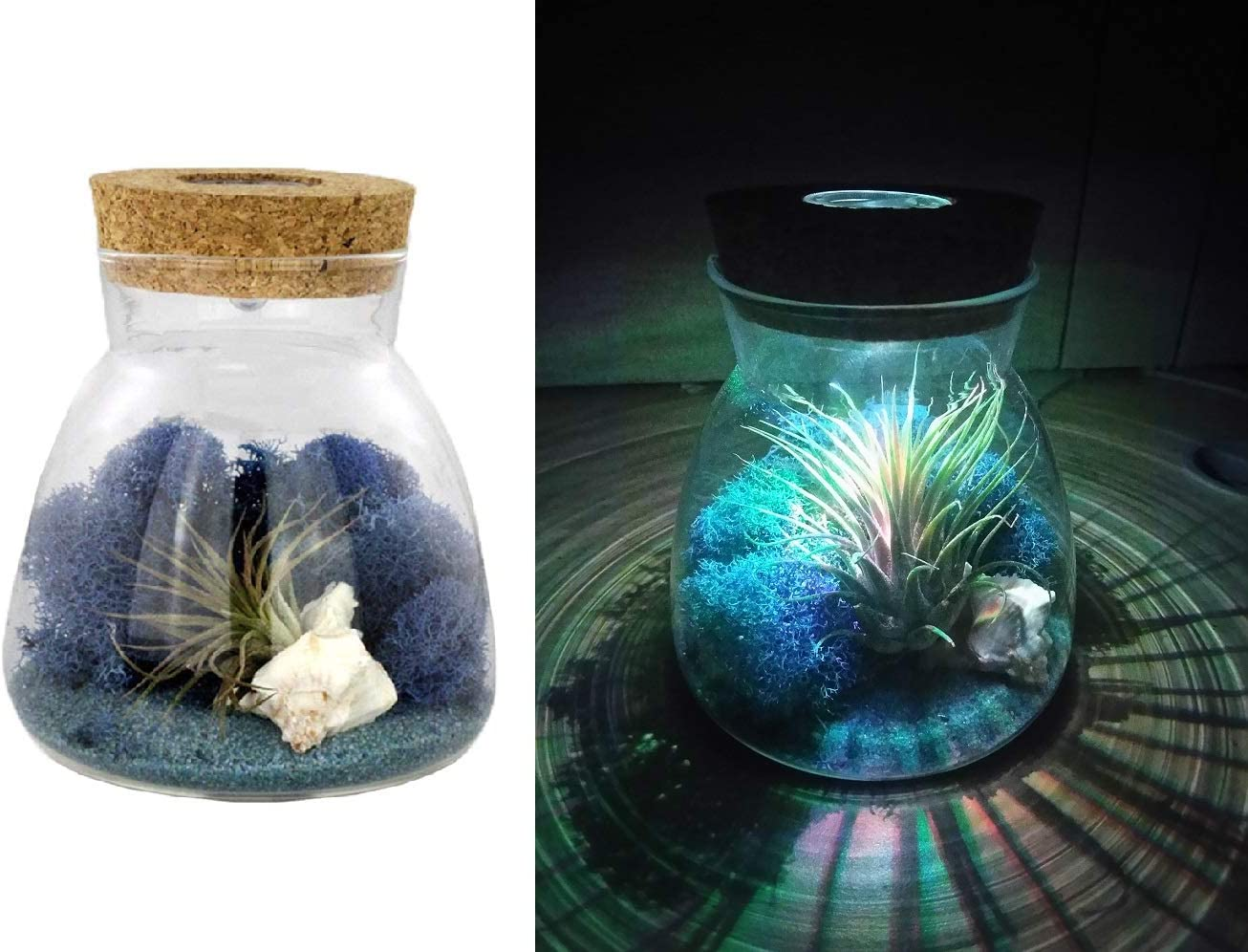 Amazon Com Nw Wholesaler Live Tillandsia Air Plant Terrarium Kit With Color Changing Led Light Display Multi Color Illuminating Light Changes Air Plants Colors Blue Sand Garden Outdoor