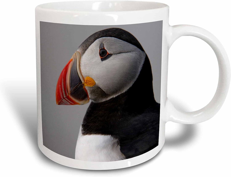 Amazon Com 3drose Atlantic Puffin Birds Macias Seal Isle Me Us20 Krs0022 Keith And Rebecca Snell Ceramic Mug 15 Oz White Kitchen Dining
