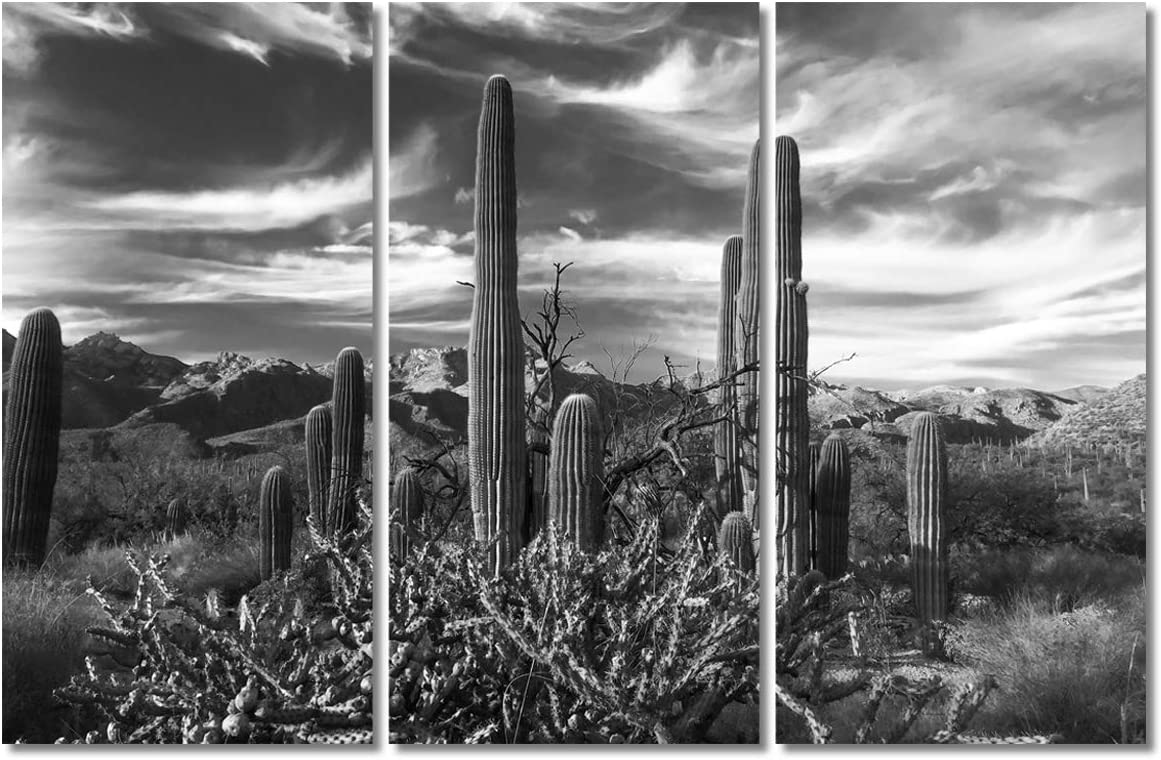 Black and White Native American Wall Decor Sonoran Desert near Phoenix Paintings USA Landscape Artwork 3Pcs/Multi Canvas Modern Artwork Home Decorations for Living Room Framed Ready to Hang(40''x60'')