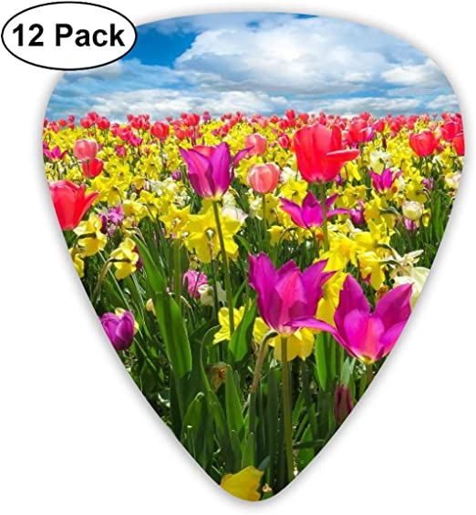 Amazon Com Spring Flowers Daffodils And Tulips Guitar Picks