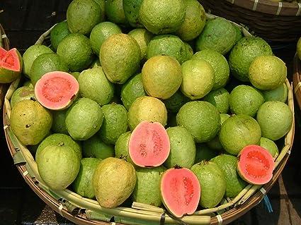 Amazon.com: 25 semillas de Psidium guajava – colombiano rojo ...