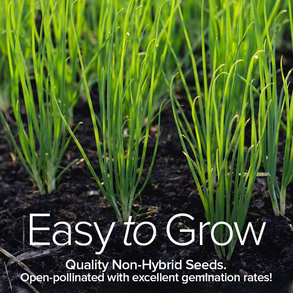 Patio, Lawn & Garden Gardening alpha-ene.co.jp Culinary Herb Seeds ...