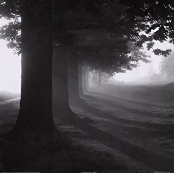 Misty trees by steven mitchell art print 12 x 12 inches