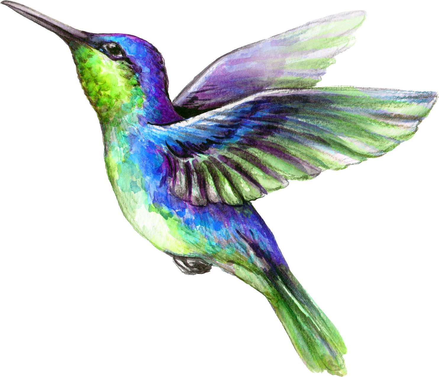 Beautiful Vibrant Colored Hummingbird Art #7 Vinyl Decal Sticker 4 Wide