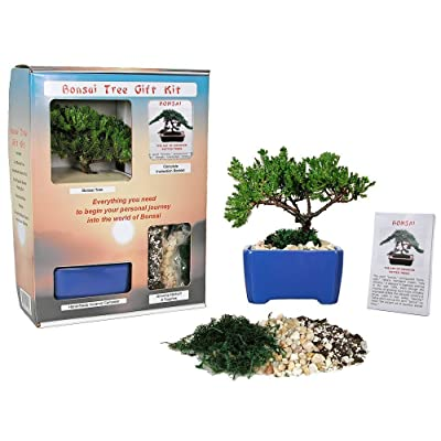 Eve's Bonsai Tree Starter Kit, Complete Kit with 2 Year Old Japanese Juniper in Gift Box : Live Indoor Bonsai Plants : Everything Else