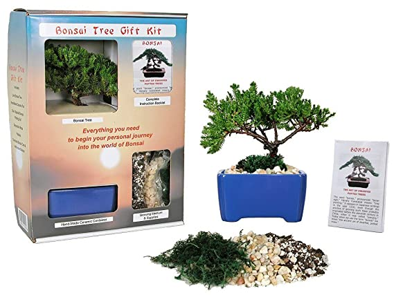 Amazon Com Eve S Bonsai Tree Starter Kit Complete Kit With 2 Year Old Japanese Juniper In Gift Box Live Indoor Bonsai Plants Grocery Gourmet Food
