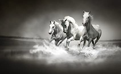 Galloping Horses Black And White Wallpaper Mural By