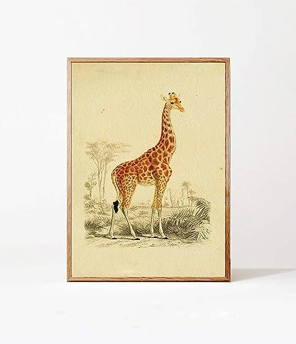 Amazon.com: QG Art Vintage Giraffe Zoology Nursery Canvas Wall Art ...