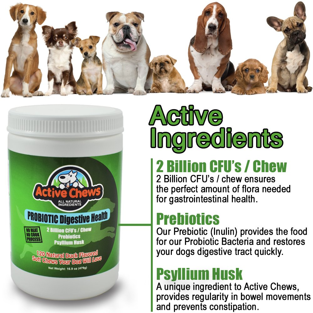 best-probiotic-for-dogs