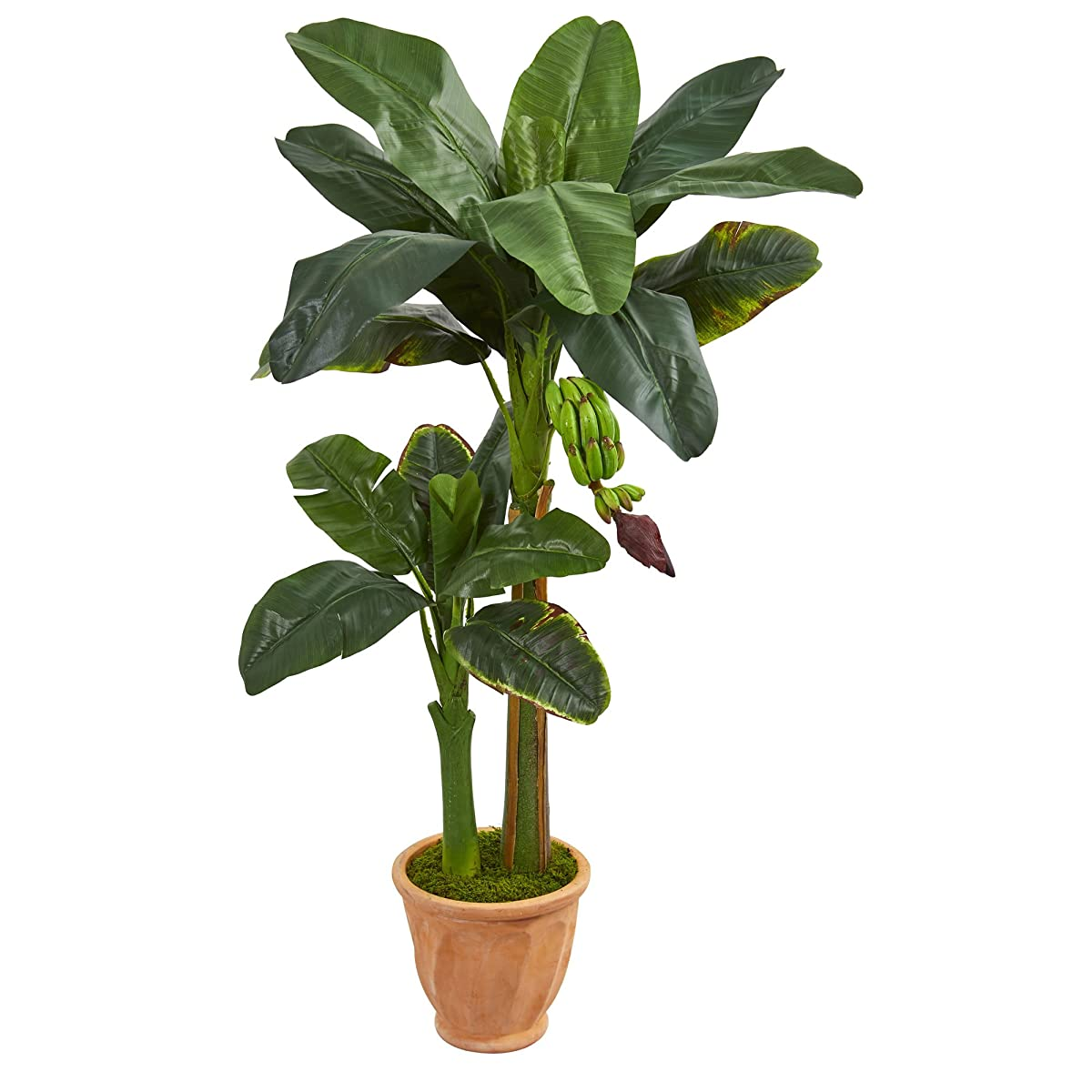 Nearly Natural Double Stalk Banana in Terracotta Planter 5