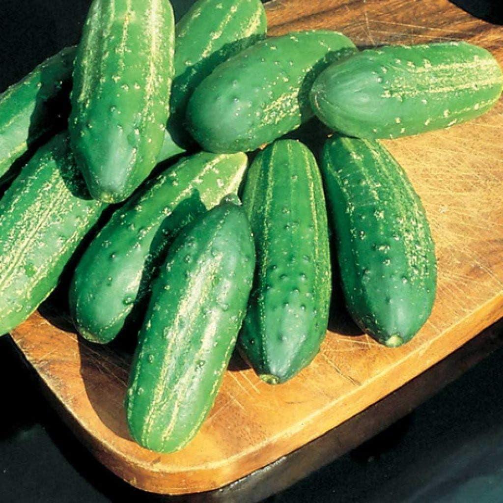 David's Garden Seeds Cucumber Pickling Calypso SL7775 (Green) 25 Non-GMO, Hybrid Seeds