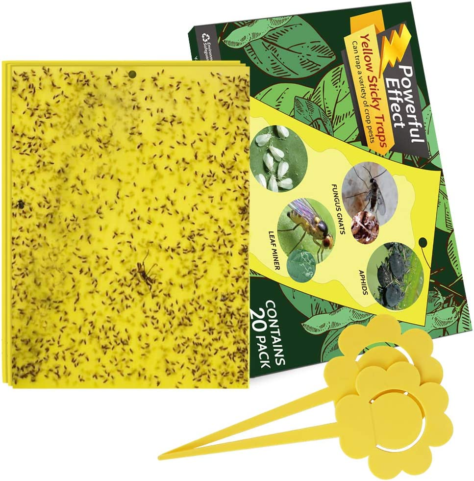 Fruit Fly and Other Pesky Insects Yellow Sticky Traps for Flying Insects- Trap Fungus Gnat Gnat Traps for House Plants Indoor and Outdoor 15 pcs