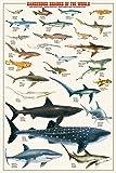 Dangerous Sharks of the World Poster Print, 24x36