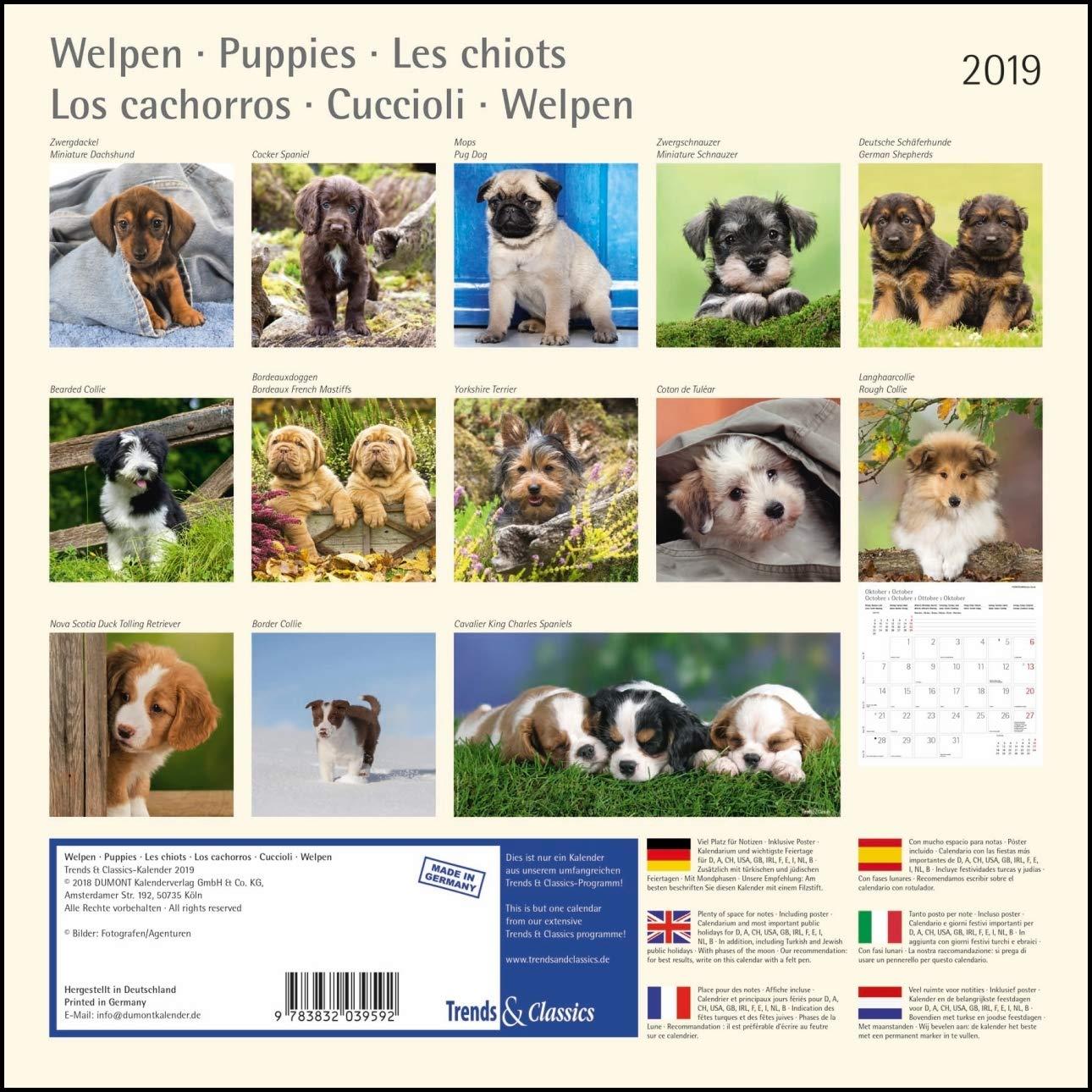 Dumont Formato 30x30 cm Con poster staccabile Calendario da muro Cagnolini 2019