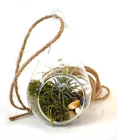 9greenbox Air Plant Tear Drop Terrarium Kit With Moss And
