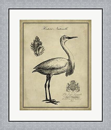 Amazon.com: Antiquarian Egret by Vision studio Framed Art Print Wall ...