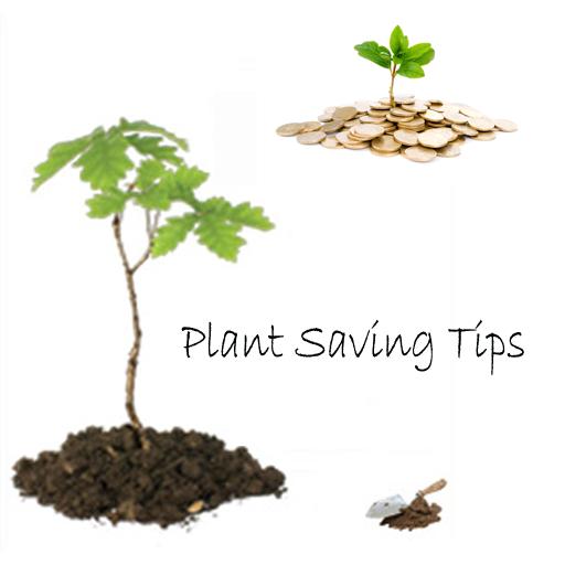 plant-saving-tips