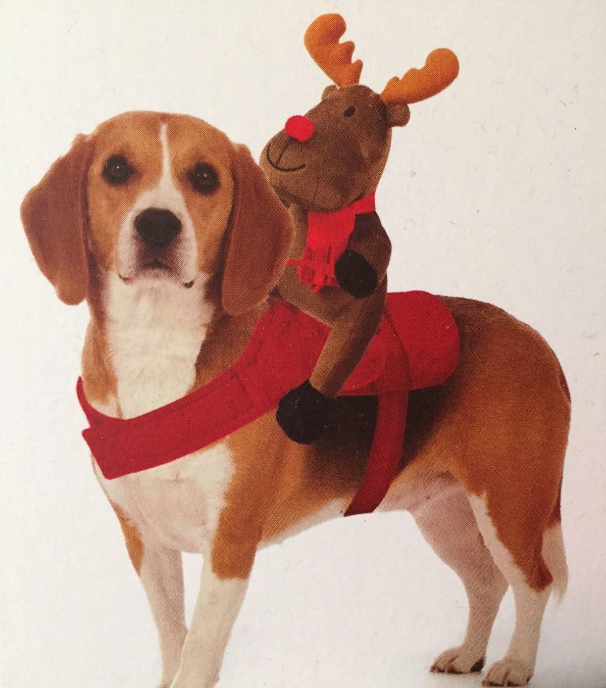 Mypets Arnés de Reno de Navidad para Perros: Amazon.es: Productos ...